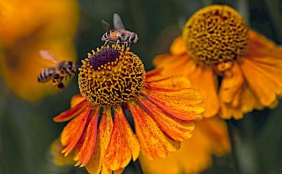 Flora & fauna in the Dutch countryside. © Hollandfotograaf
