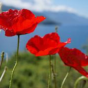 Magnificent Macedonia - 9 days Photo