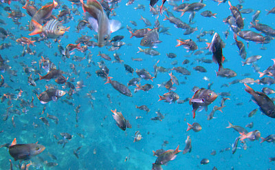 School of fish on the Galapagos Islands. Flickr:Linda