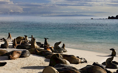 Sea Lions sunbathing in the Galapagos.