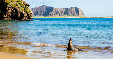 Sea Lion greets you on San Cristobal Island, Galapagos. Wikimedia Commons:Diego Delso