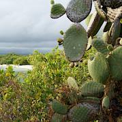 Galapagos Bike and Boat Photo