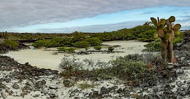 Oasis on Garrapatero, Galapagos. Flickr:David Ceballos