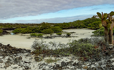 Oasis on Garrapatero, Galapagos. Flickr:David Ceballos