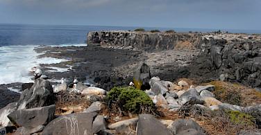 Bird watching on Punta Suarez, Galapagos. Flickr:doriana del sarto