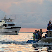 Beluga passengers heading for land | Bike & Boat Tours