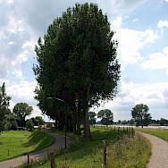 Cycling along the river in Maasbommel, Gelderland, the Netherlands. Flickr:Frank van Laanen