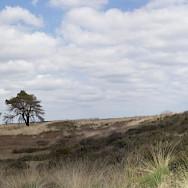 Hoge Veluwe National Park in Otterlo, Gelderland, the Netherlands. Flickr:Jac Janssen