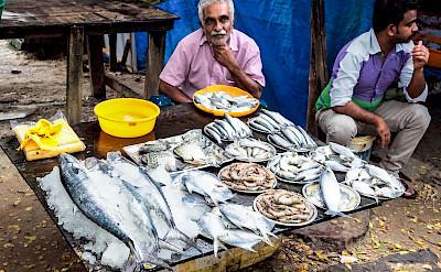 Fresh fish in Kochi, Kerala, India. Flicks:Dunphasizer