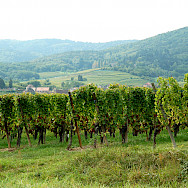 Green vine-covered hills dot the landscape in Alsace, France. Flickr:ilovebutter