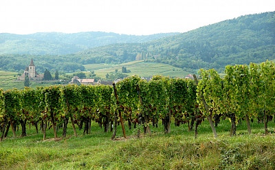 Green vine-covered hills dot the landscape in Alsace, France. Flickr:ilovebutter