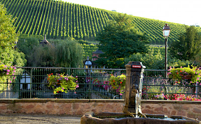 Hills upon hills of vines to be found in Alsace, France. Flickr:Peter Hurford