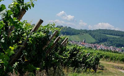 Wine Route through Alsace, France. Flickr:Claudia Schillinger