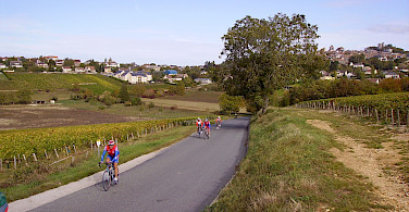Cycling past vineyards in Sancerre, Loire Valley, France. Flickr:JPC24M
