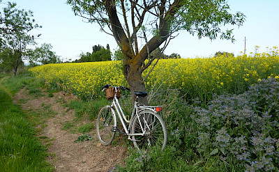 Biking the Costa Brava & Empordà Bike Tour.