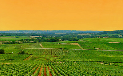 Overlooking the vine-covered hills of Burgundy, France.