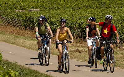 Enjoying the vineyards on the Burgundy, France Bike Tour.