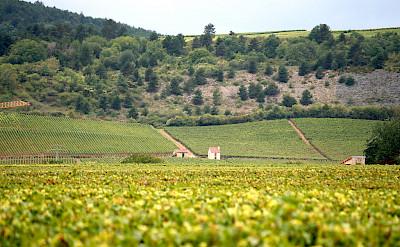 Vineyard galore through Burgundy, France. Flickr: Megan Cole