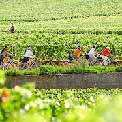 Northern Burgundy Photo