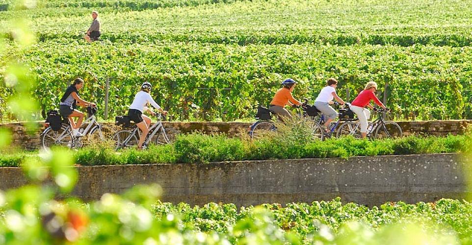 Biking among the vineyards in Burgundy, France.