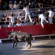 Running from the bulls in Arles, France. Flickr:Ralf Steinberger
