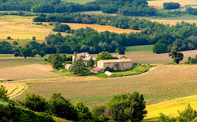 Vast vineyard estates cover the landscape from Burgundy to Provence, France.