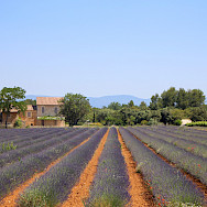 Lavender Farm in Provence, France. Photo via TO