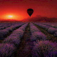 Hot air balloon rides over lavender fields in Provence, France. Photo via TO