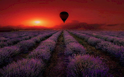 Hot air balloon rides over lavender fields in Provence, France.