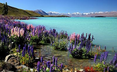 Lake Tekapo by Mt Cook in New Zealand. Flickr:Bernard Spragg. NZ