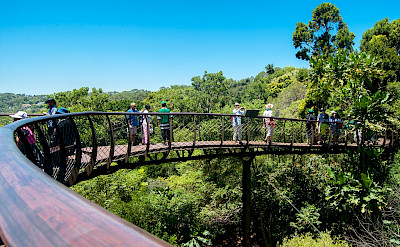 Great bridge overlooking Kirstenbosch National Botanical Garden, Cape Town, South Africa. Flickr:Meraj Chhaya