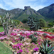 You can hike up Table Mountain from the vast and gorgeous Kirstenbosch National Botanical Garden, Cape Town, South Africa. Flickr:South African Tourism