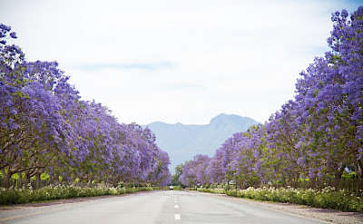 It truly is the Garden Route