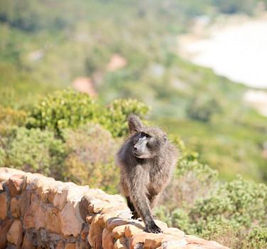 Varied wildlife in South Africa