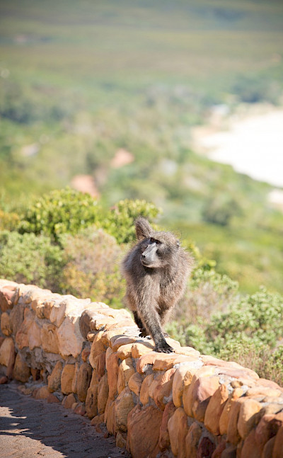 Varied wildlife in South Africa
