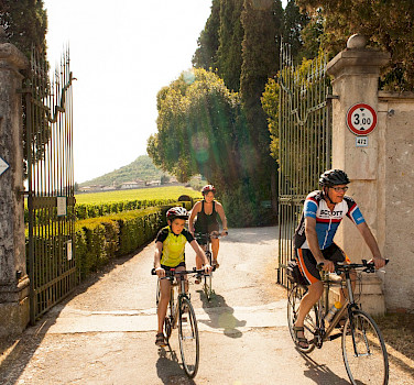 Biking past vineyards on the Lake Garda & Veneto Bike Tour in Italy. Photo via TO