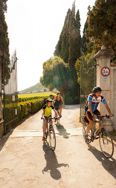 Biking past vineyards on the Lake Garda & Veneto Bike Tour in Italy. Photo via TO