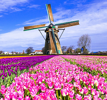 Tulips and windmills must mean Holland! Flickr:Matheus Swanson