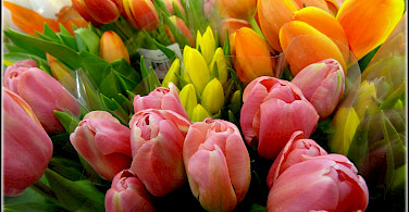 Bunches of tulips! Flickr:Rinapitucci