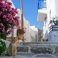 White villages dot Paros Island, Greece. Photo via TO