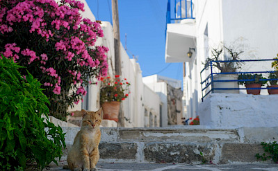 White villages dot Paros Island, Greece. Photo via TO