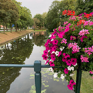 Flowers in Vianen