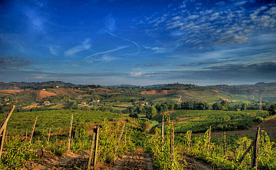 Vineyards in Chianti, Italy. Flickr:Francescosgroi