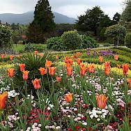 Flower Garden at Muckross House in Killarney, Ireland. Creative Commons:John Menard
