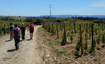 Hiking among vineyards in the Douro River Valley in Portugal.