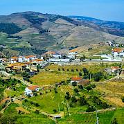 Douro Valley Vineyards Photo