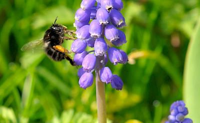 Flora & fauna in England. Flickr:Random_fotos