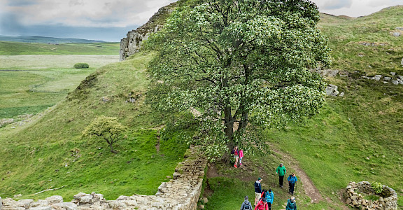 Robin Hood's Tree at Hadrian's Wall in England. Flickr:Mike Locke