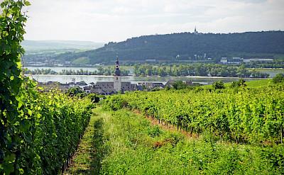 Biking past vineyards and the Rhine in Rudesheim, Germany. Flickr:Andrew Gustar