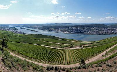 Overlooking vineyard valley in Rudesheim am Rhine, Germany. Flickr:Philipp Gerbig